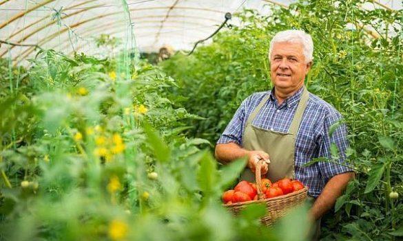 Cum sa protejezi legumele si fructele de caldura?